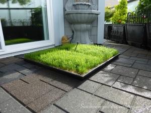 Cayman's grass pad