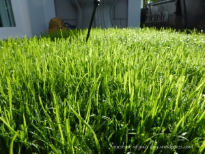 grass pad 2