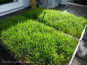 grass pad 4